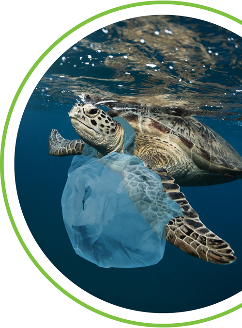 Image of a turtle with plastic bag around its neck
